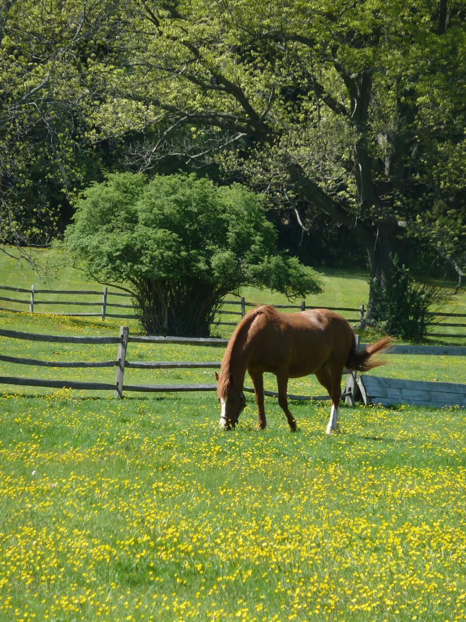 Horses in New England